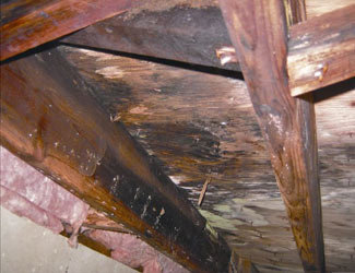 mold and rot in a Albany crawl space
